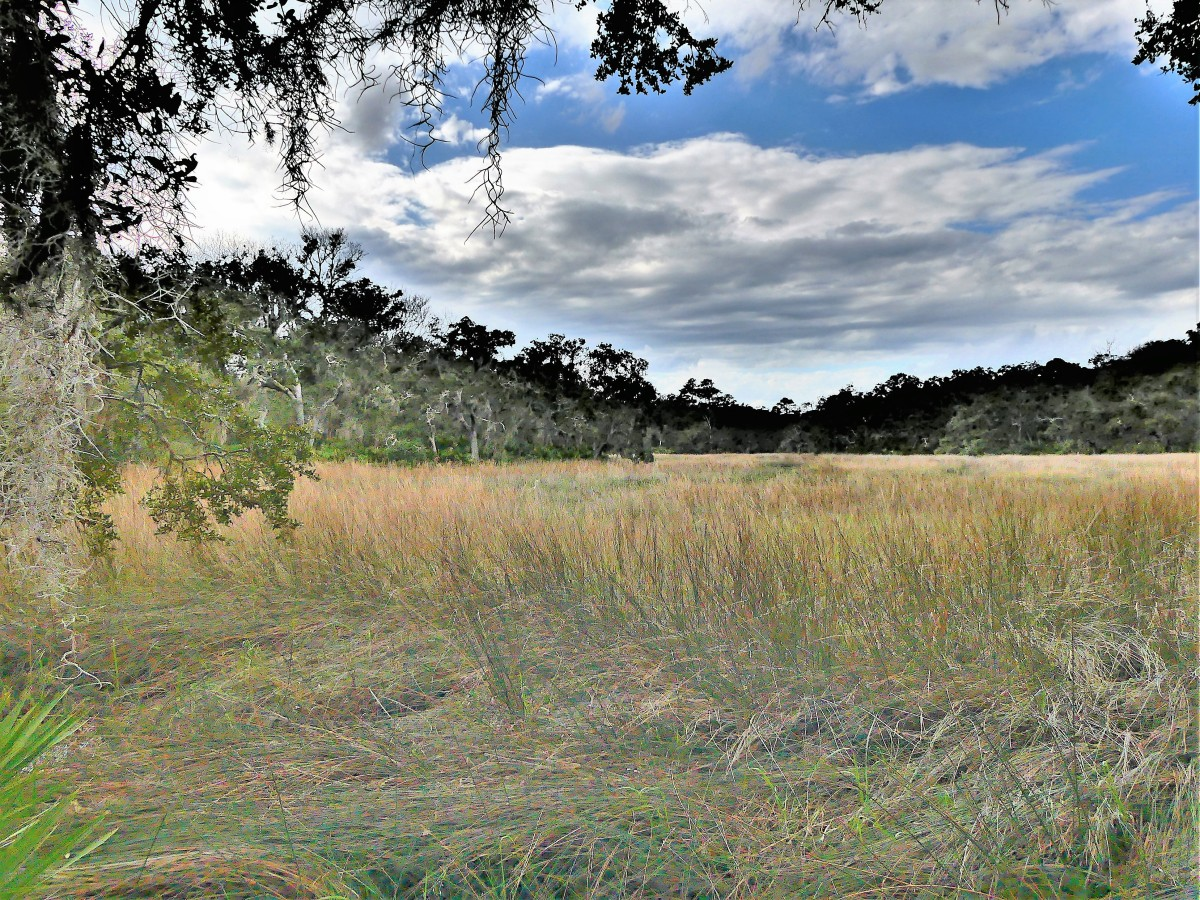 marshland (2)