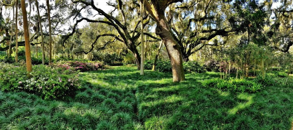 green garden grasses