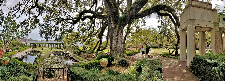 live oak over gardens