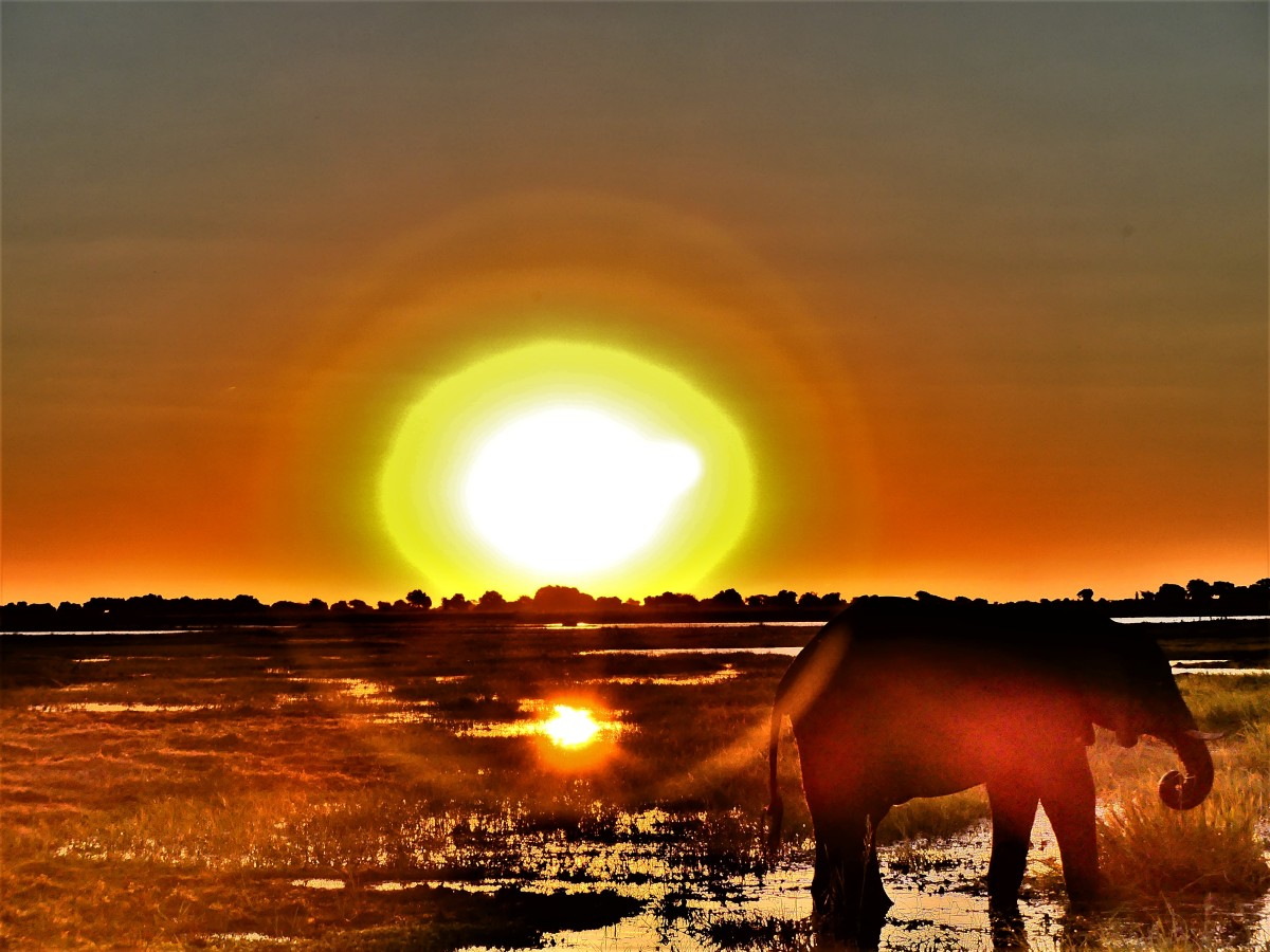 banded sun with elephant