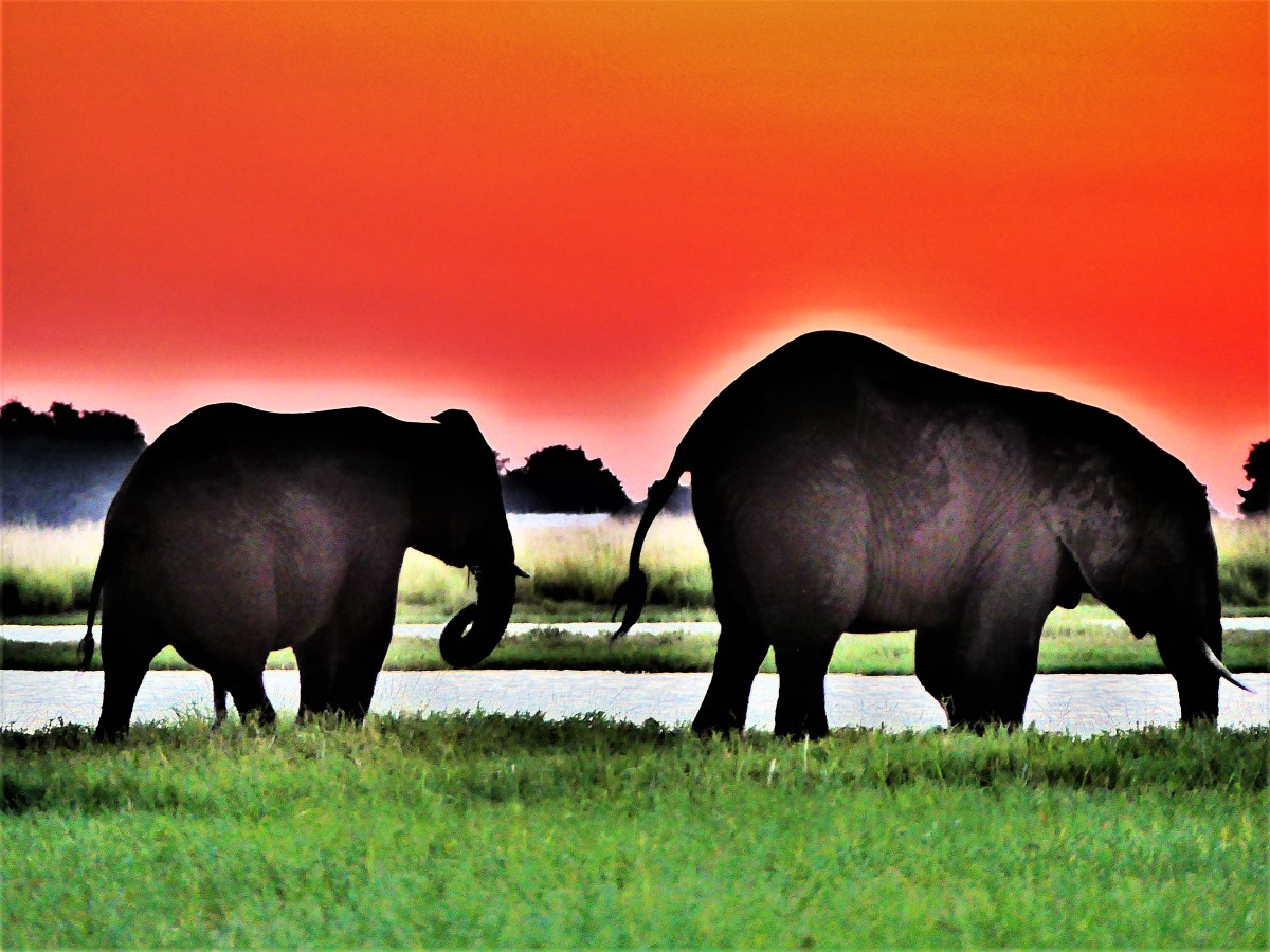 elephants under an orange sky