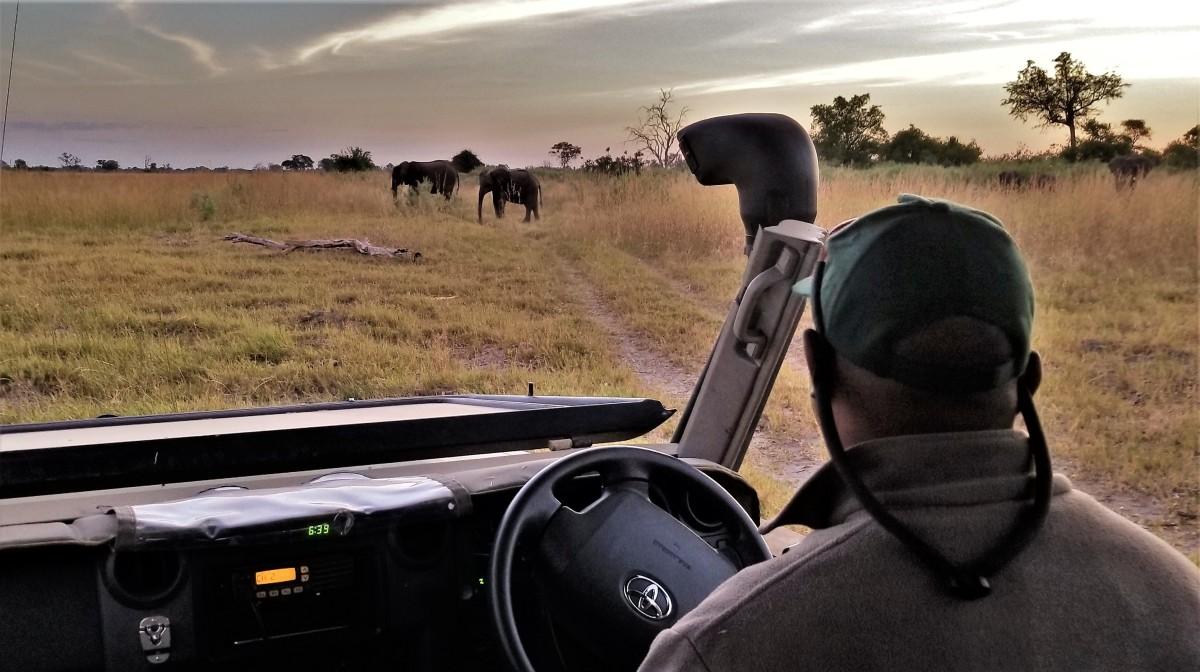 KT shows us elephants