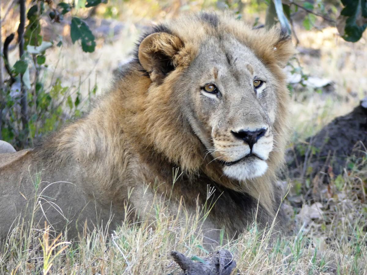 lion on the mound