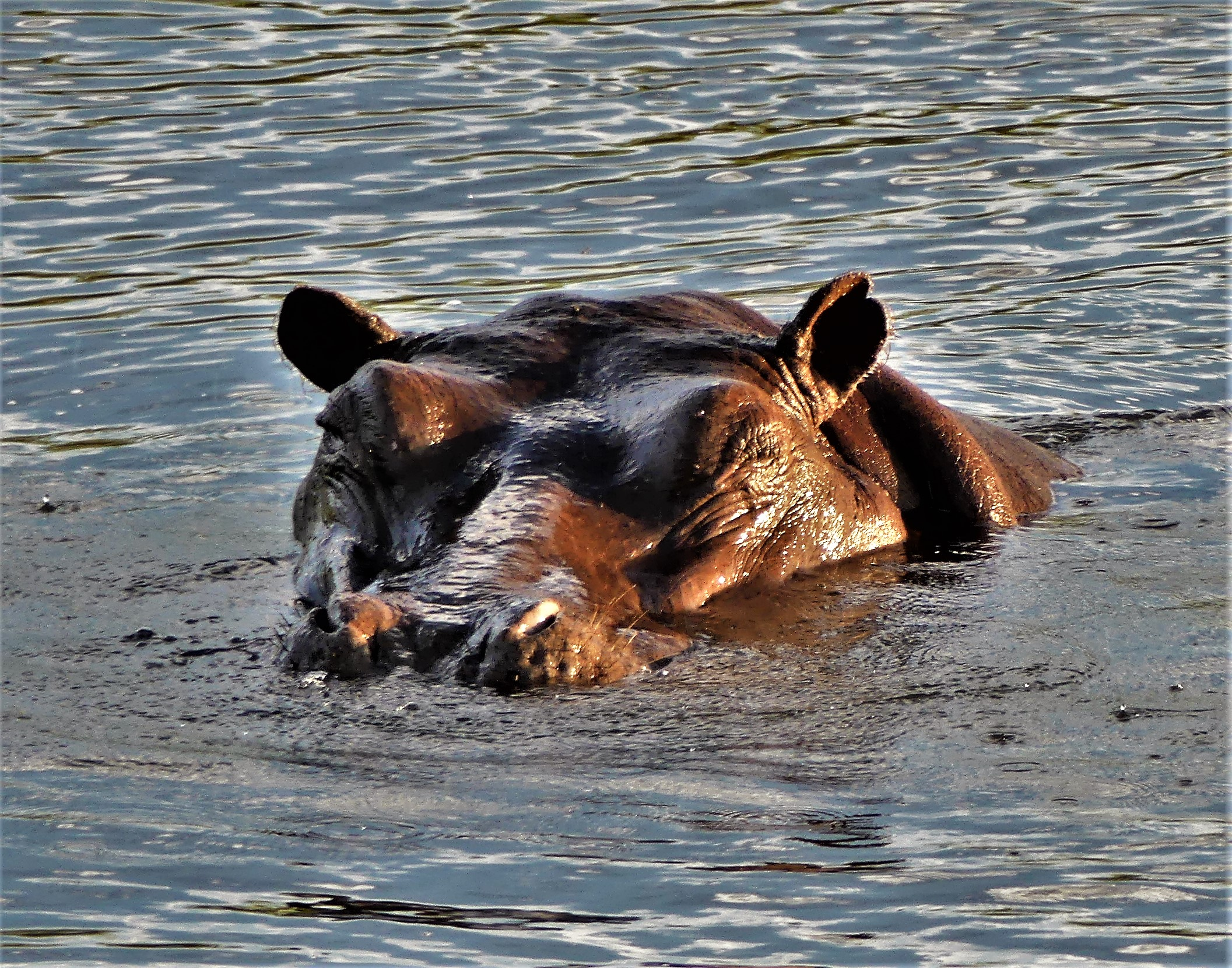 napping in the water