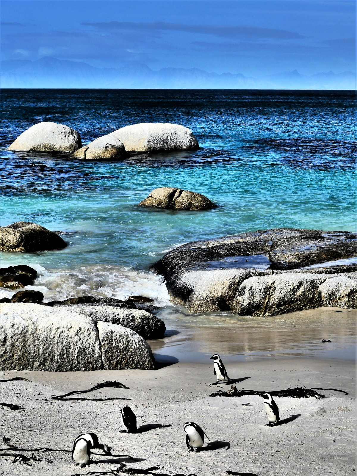Pengions of Simon's Town