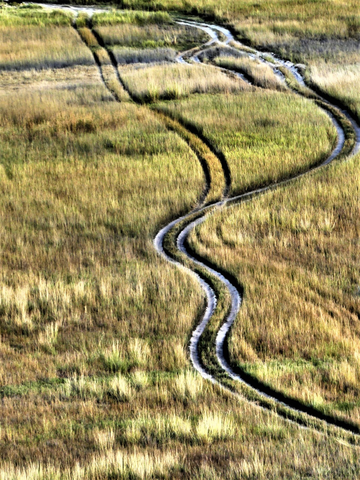 savanna road tracks