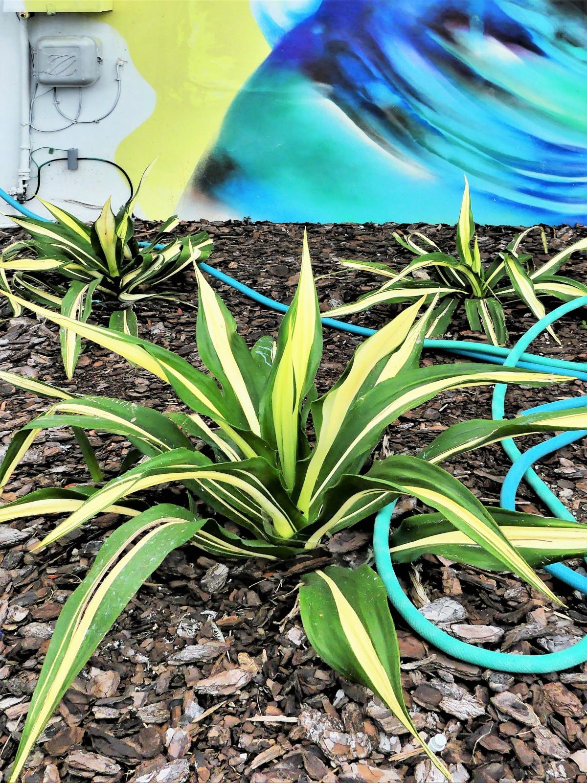 hose plant wall