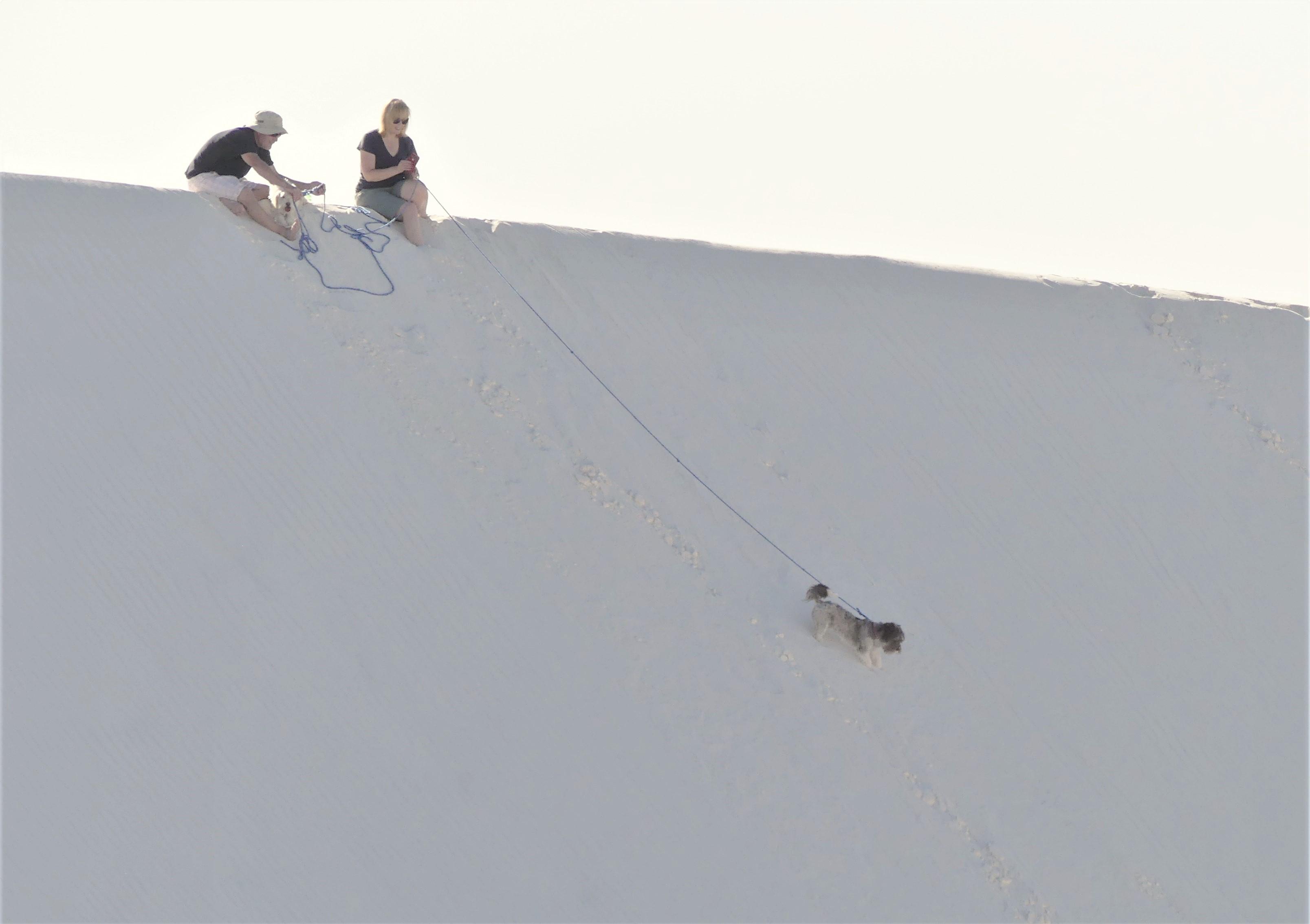 dog walking (2)