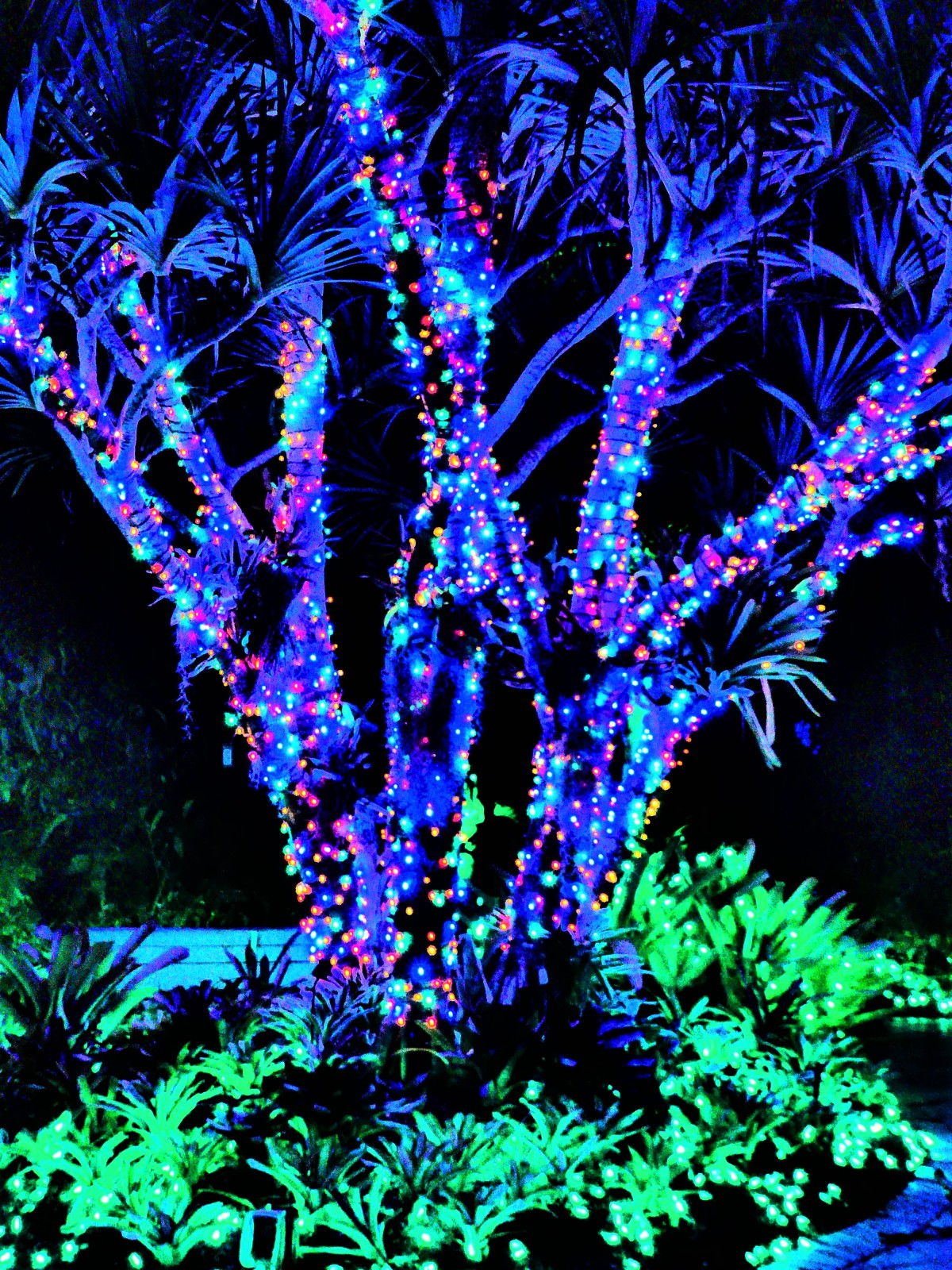 lit palms