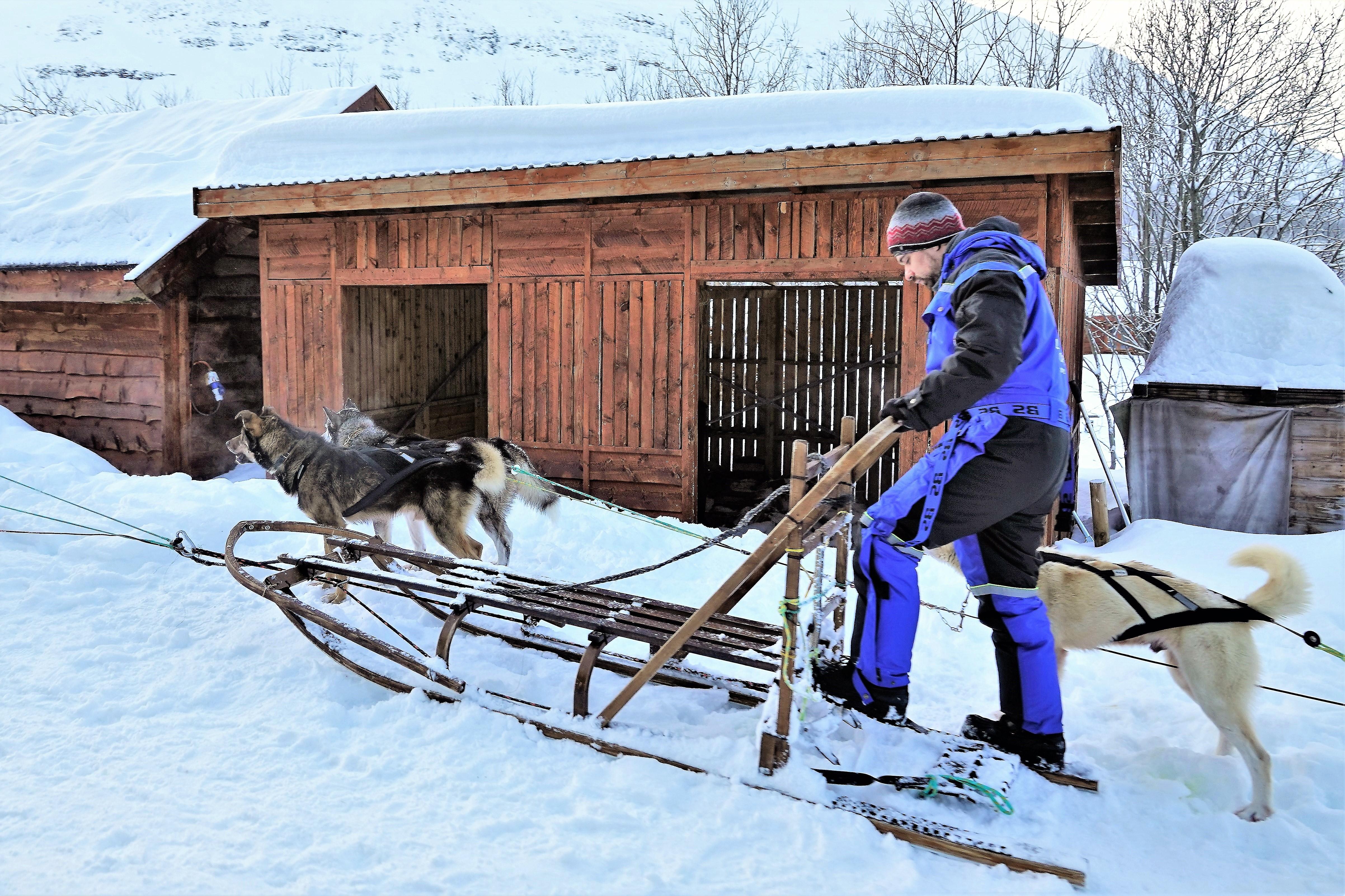 dog sledding (2)