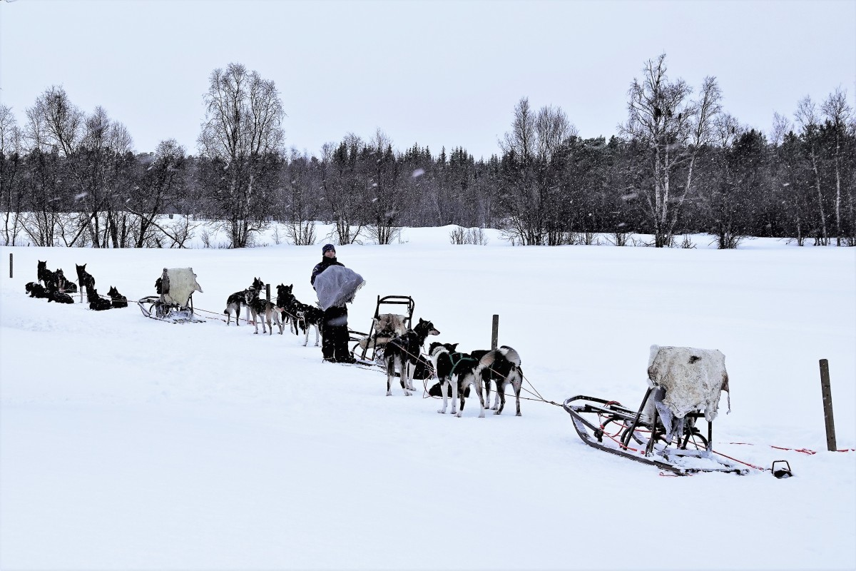 dog team and sled (3)